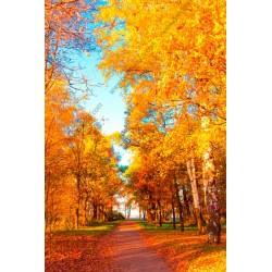 Mural de pared árboles en otoño