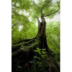 Fotomural árbol antiguo