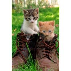 Fotomural gatitos