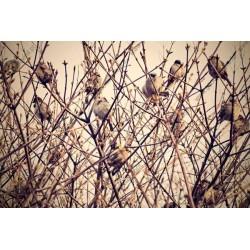 Fotomural pájaros en las ramas