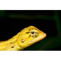 Fotomural camaleón