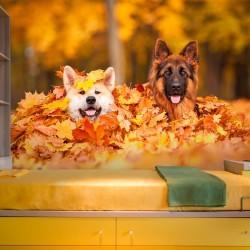 Fotomural con perros