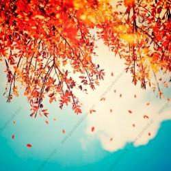 Fotomural hojas cayendo