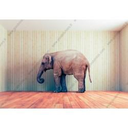 Fotomural elefante en la habitación