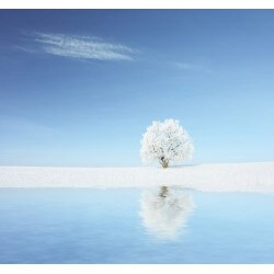 Fotomural de árbol blanco