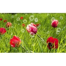 Fotomural de tulipanes