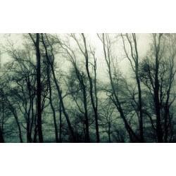 Mural bosque con niebla