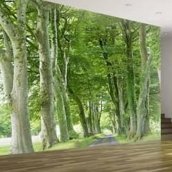 Fotomural camino con árboles