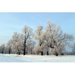 Fotomural amanecer blanco