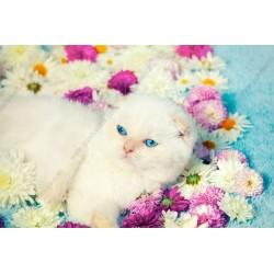 Fotomural gato blanco