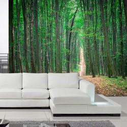 Fotomural árboles del bosque